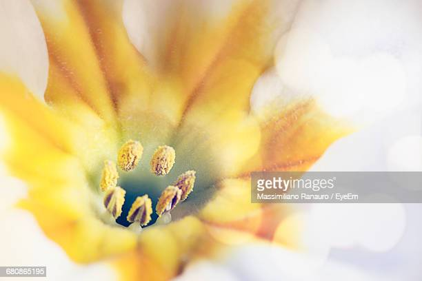 extreme close-up of flower pollen - massimiliano ranauro stock pictures, royalty-free photos & images