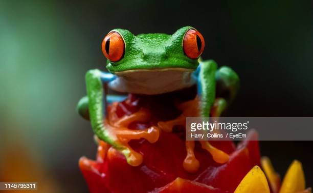 extreme close-up of frog - frog stock pictures, royalty-free photos & images