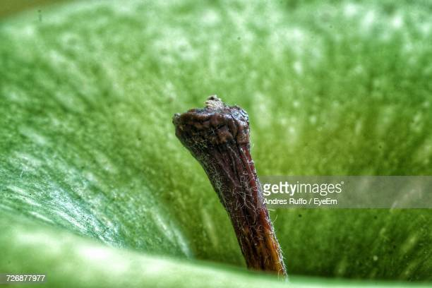 Extreme Close-Up Of Granny Smith Apple Stem