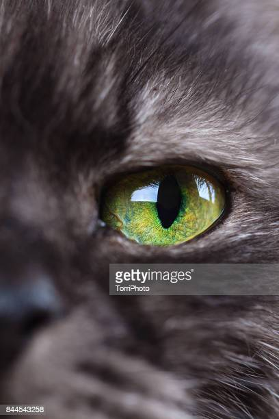 Extreme close-up of green cat eye