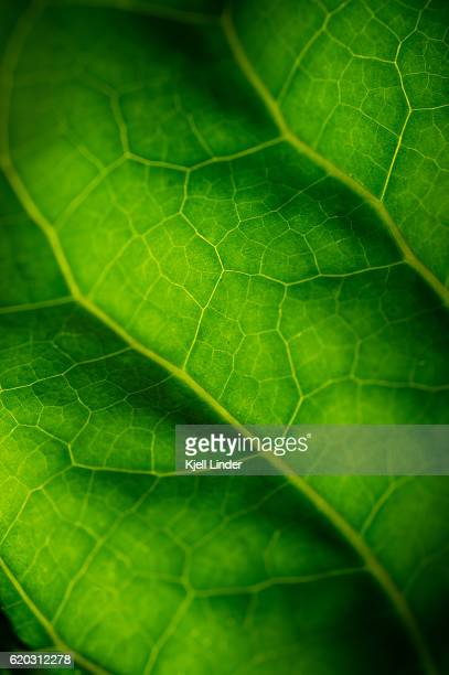 Extreme close-up of green leaf veins