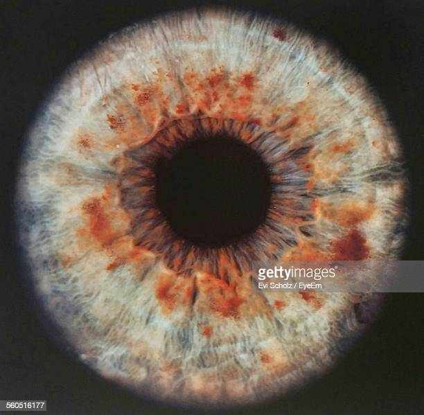 Extreme Close-Up Of Human Eye Against Black Background