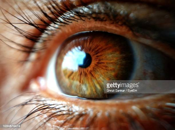extreme close-up of human eye - braune augen stock-fotos und bilder