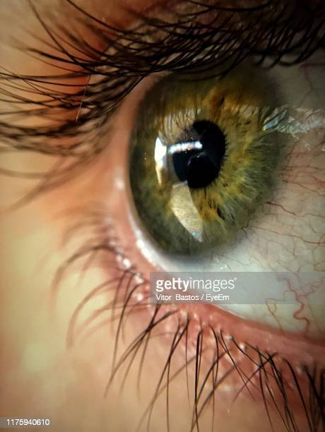 extreme close-up of human eye - green eyes stock pictures, royalty-free photos & images