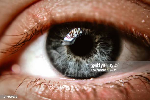 extreme close-up of human eye - gray eyes stock pictures, royalty-free photos & images