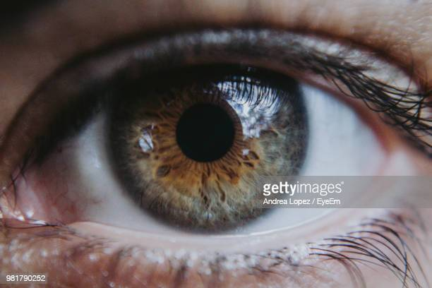 extreme close-up of human eye - oeil humain photos et images de collection