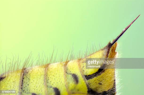 Extreme close-up of insect stinger