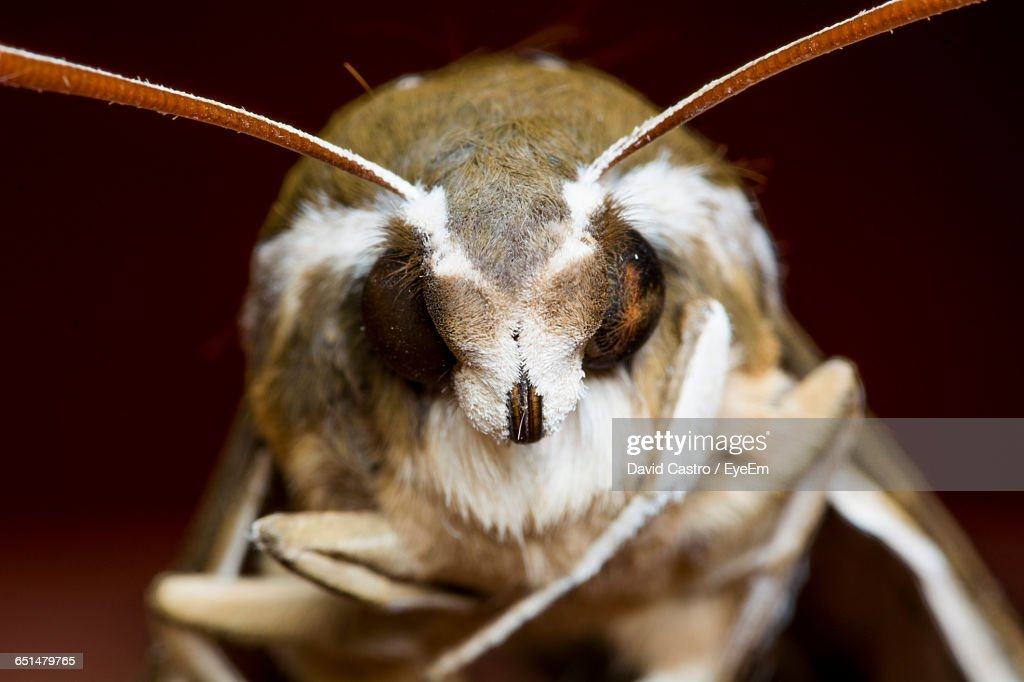 Extreme Close-Up Of Moth : Stock Photo