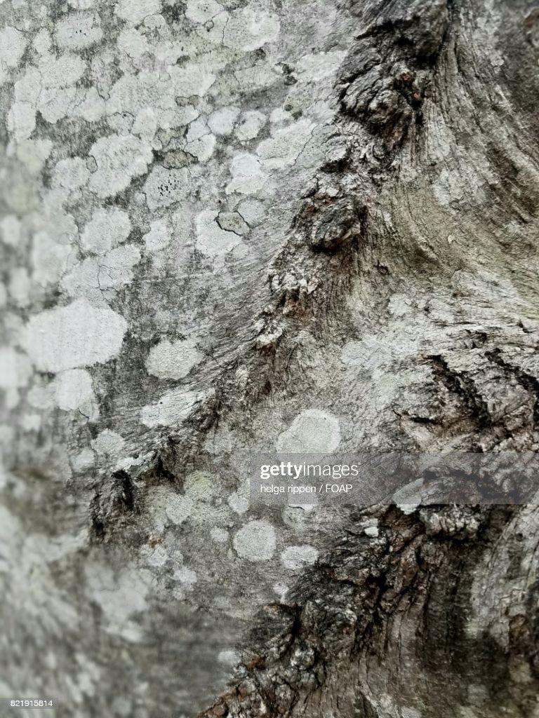 Extreme close-up of tree bark : Stock Photo
