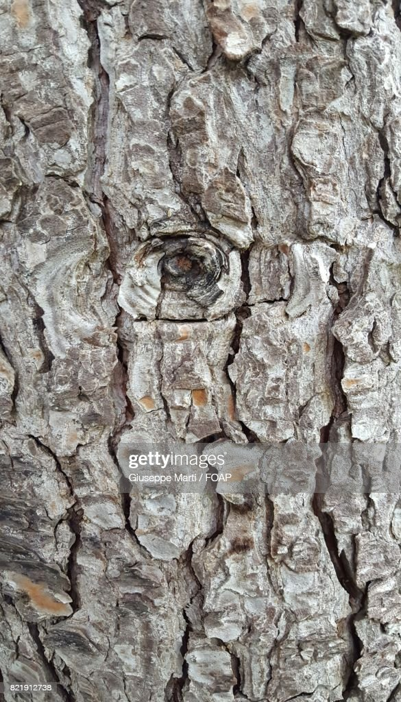 Extreme close-up of tree trunk : Stock Photo