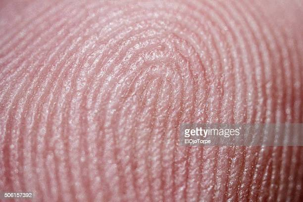 extreme close-up of up finger, fingerprint - human finger stock photos and pictures
