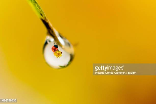 Extreme Close-Up Of Water Drop On Twig With Reflection On Flowers