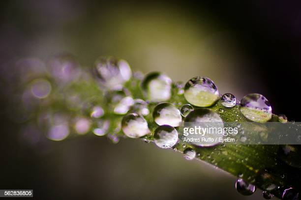 Extreme Close-Up Of Water Drops On Leaf