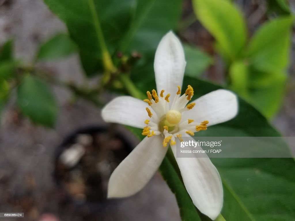 Extreme close-up of white flower : Stock Photo