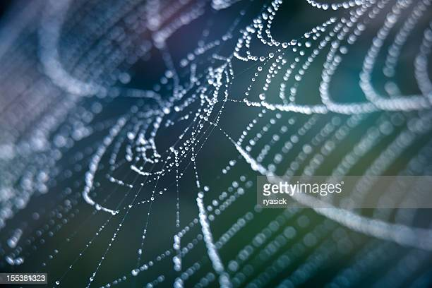 Extreme Closeup Spiderweb With Dew
