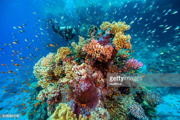extreme underwater - seascape stock pictures, royalty-free photos & images