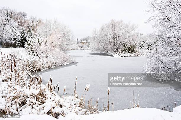 Extreme winter in Toronto Frozen pond and snow covered trees in winter season The leafless trees and grass is covered with snow while the lake is...