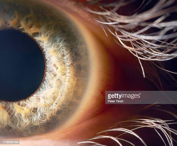 eye close-up - sensory perception stock pictures, royalty-free photos & images