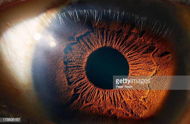eye close-up - brown eyes stock pictures, royalty-free photos & images