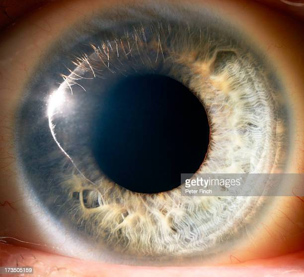 eye close-up - extreme close up stock pictures, royalty-free photos & images