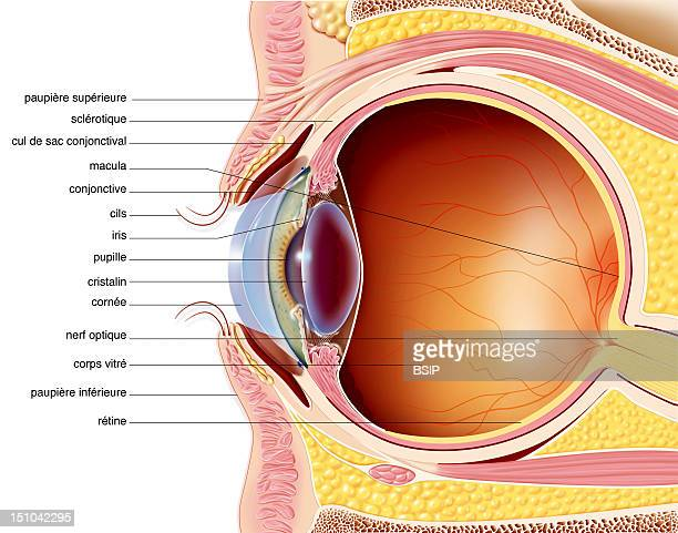 Conjunctiva Stock Photos And Pictures Getty Images