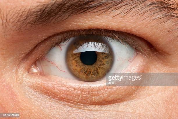 eye macro (xxxl) - light brown eyes stock photos and pictures