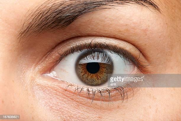 Auge Makro (XXXL