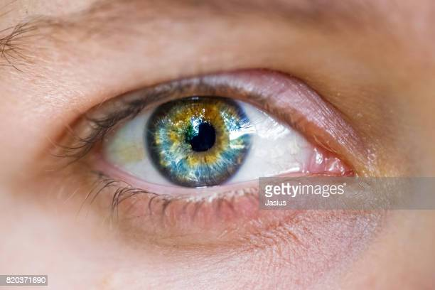 eye macro - big eyes stock photos and pictures