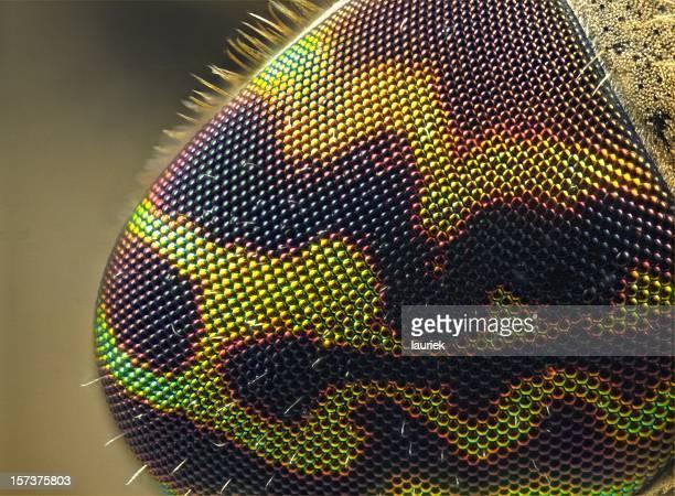 Eye of a Horsefly Heamatopota crassicornis
