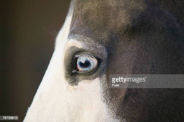 Eye of a Quarter Horse