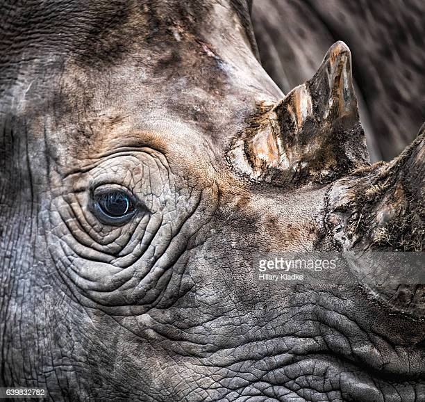 Eye of a rhino