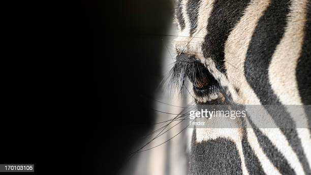 eye of a zebra - zebra stock pictures, royalty-free photos & images