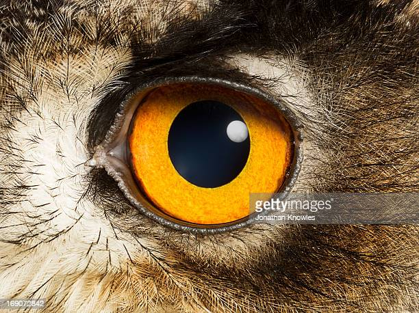 eye of an eagle owl, close up - animal eye stock pictures, royalty-free photos & images