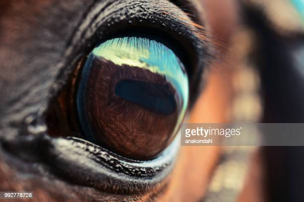 eye of the horse. macro - thoroughbred horse stock pictures, royalty-free photos & images