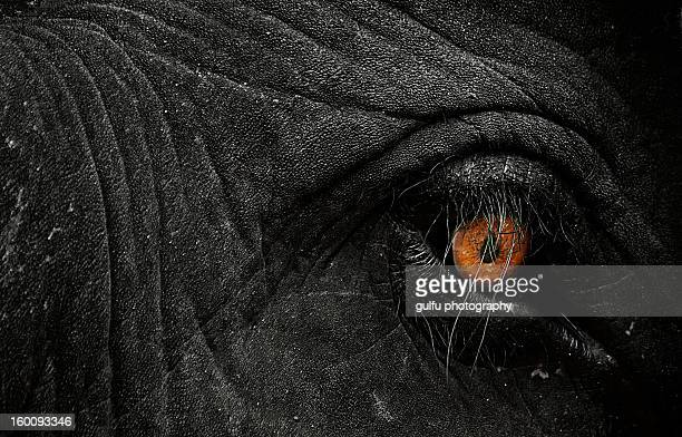 eye on fire - kerala elephants stock pictures, royalty-free photos & images
