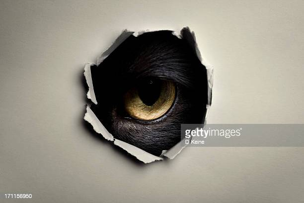 eye - evil stock pictures, royalty-free photos & images