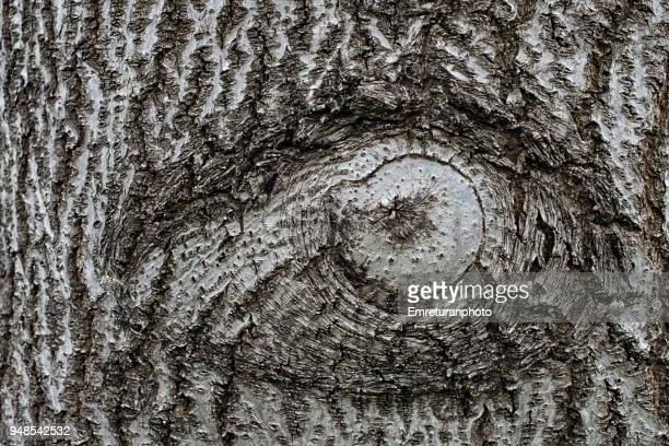 eye symbol on a tree trunk. - emreturanphoto stock pictures, royalty-free photos & images