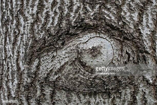 eye symbol on a tree trunk. - emreturanphoto stock-fotos und bilder