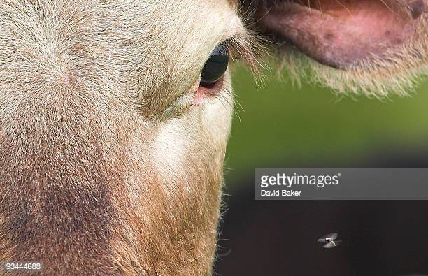 eye to eye - wales stockfoto's en -beelden