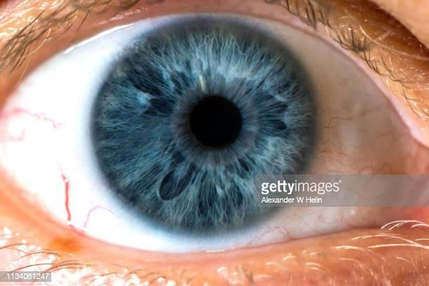 eyeball - iris eye stock pictures, royalty-free photos & images