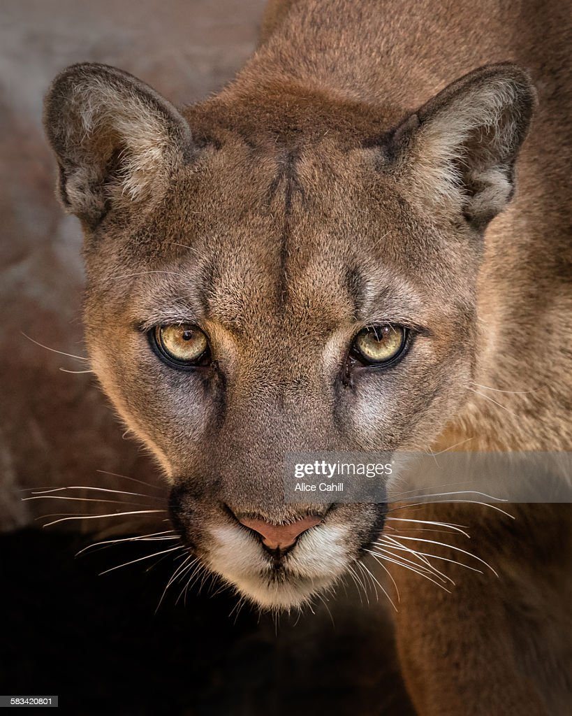 Eyes of the cat : Stock Photo