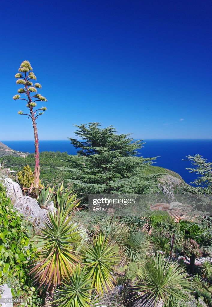 Eze, the exotic garden. : News Photo