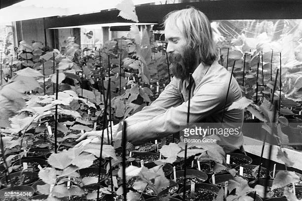 Ezekiel Goodband works in a growth chamber surrounded by new diseaseresistant American elm seedlings in Harrisville NH Oct 31 1984