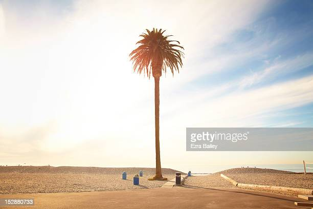 Solitary palm tree against sunset