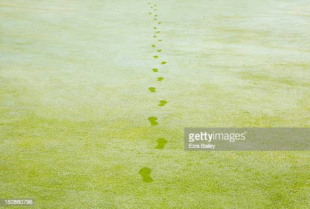 footprints in early morning dew - footprint stock pictures, royalty-free photos & images