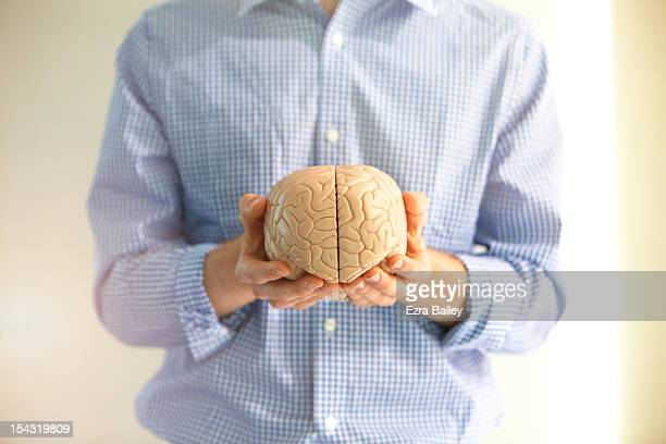 man holding a model of a brain. - human brain stock pictures, royalty-free photos & images