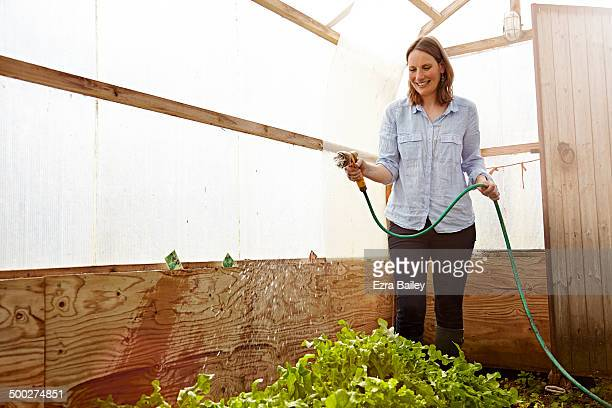 Woman watering vegetables in a greenhouse