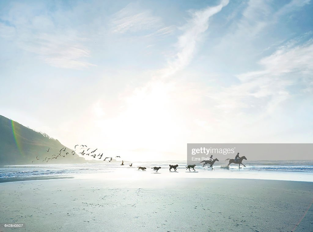 Conceptual shot of riders, dogs and birds on beach : Stock Photo