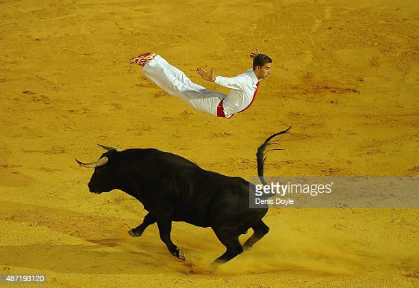 Fabien Napias of the French Recortadores company Passion Saltador leaps over a charging bull at the end of the Liga de Corte Puro finals at the Plaza...