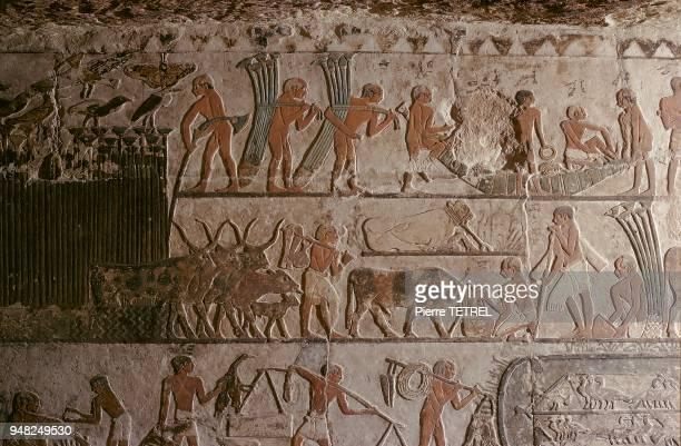 Fabrication d'un bateau à l'aide de papyrus sur les murs de la tombe de l'épouse du Pharaon AKHENATON